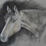 Stonecrest horse