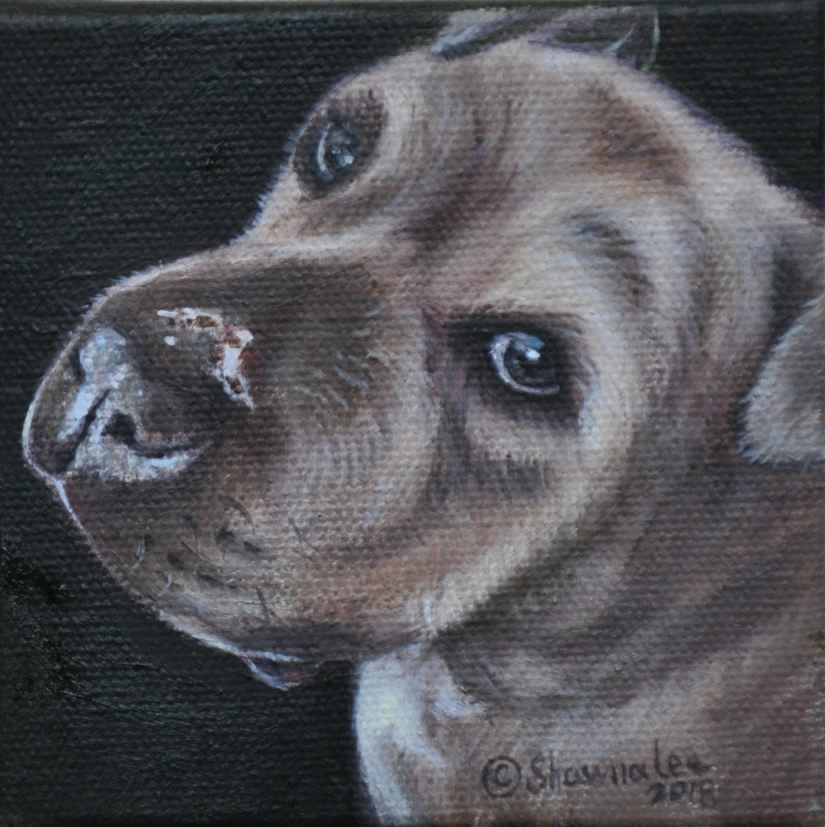 95b3117c9b49 A 4×4″ Oil Painting of Lenny. Order your painting at the Blessing and it  will be ready for Christmas!